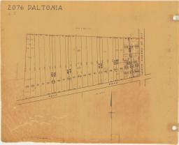 2076-77-daltonia-1024-x-833-256-x-208.jpg